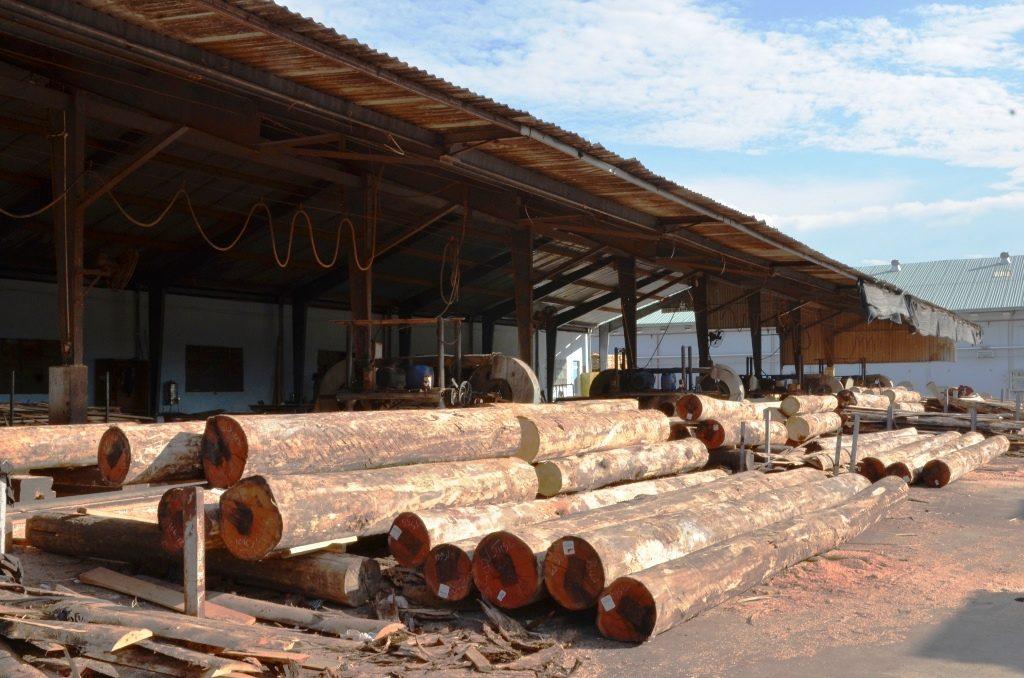 Kho gỗ tròn nguyên liệu